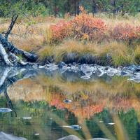 Merced River Autumn Grasses by Bob in 2007-10 Yosemite