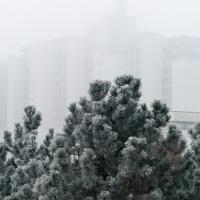 Frosty Fog by Bob in 2007-12 Munich-Prague