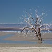 Salton Sea, Dead Trees by Bob