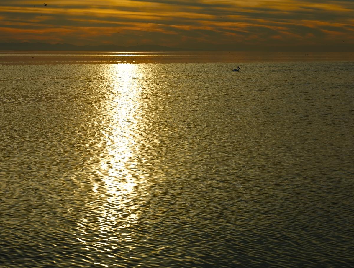 Pelicans by Bob in 2010-02 Salton Sea
