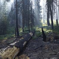 Fallen Log by Bob