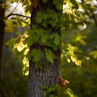 Leaves, Wayland Library by Bob in  Instructor Gallery (click to expand)