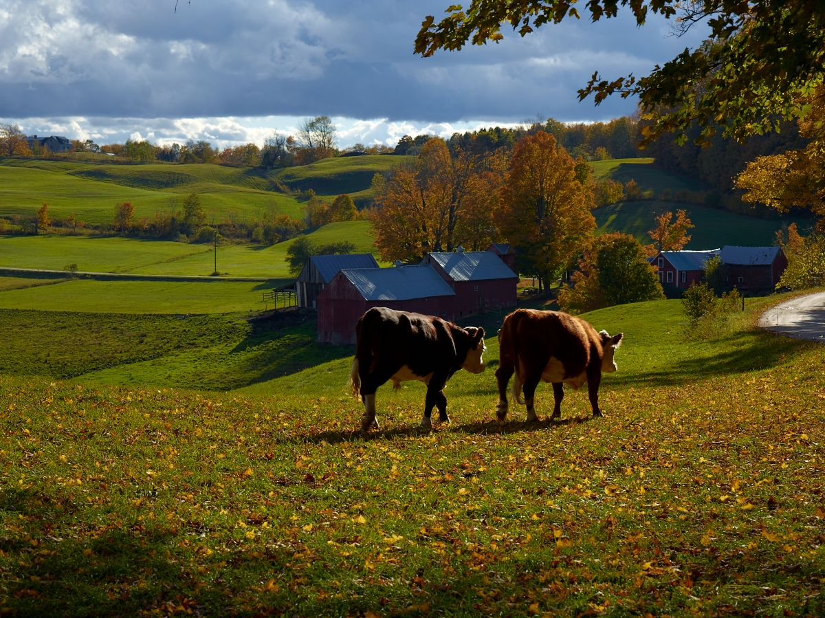 Jenni Farm, Late Afternoon by Bob in  Instructor Gallery (click to expand)