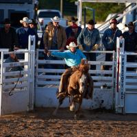 May Roping - Out Of The Gate by Bob in Bob Freund