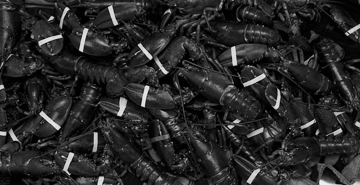 Lobsta by Bob in Bob Freund