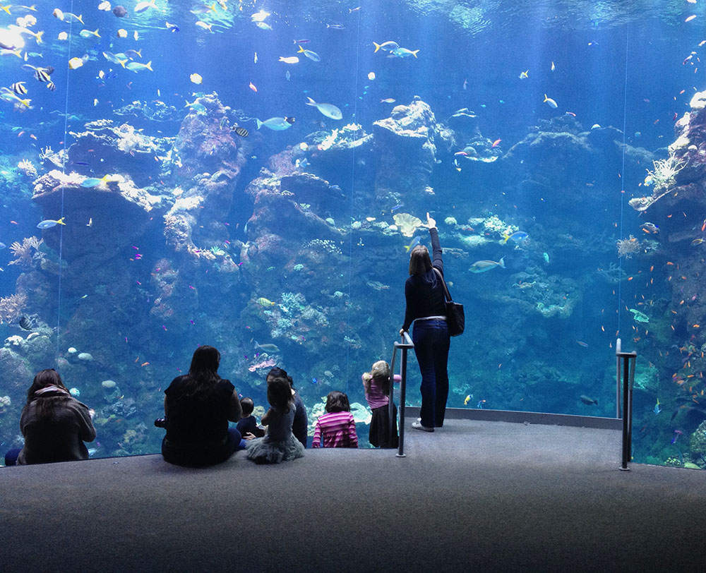 Steinhart Aquarium by Bob in Bob Freund
