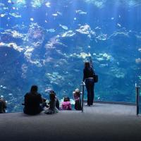 Steinhart Aquarium by Bob in Bob Freund