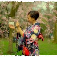 A Selfie with the Sakura by kxl