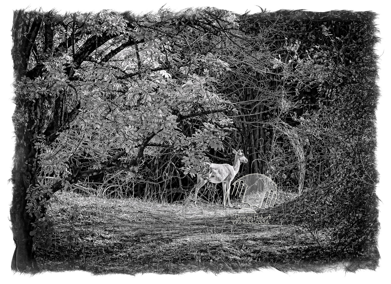 Female Impala In Thicket (2011) by In a Different Light in Regular Member Gallery