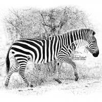 Stripes Against Thorns (2011)