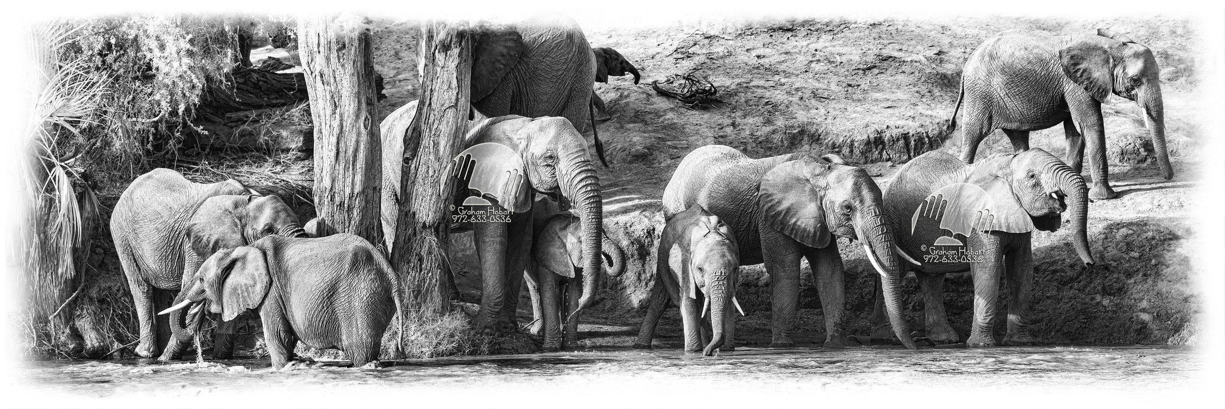 Elephants Drinking On Bank Of The River Uaso Nyiro #2 (2012) by In a Different Light in Regular Member Gallery