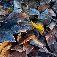Leaf by kiw in Regular Member Gallery