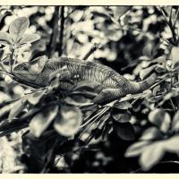 Karma Chameleon by baudolino in Regular Member Gallery