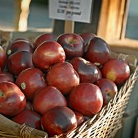 Apples by Cindy Flood in Cindy Flood