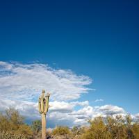 Saguaro by Cindy Flood in Cindy Flood