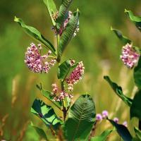 Wildflower by Cindy Flood in Cindy Flood