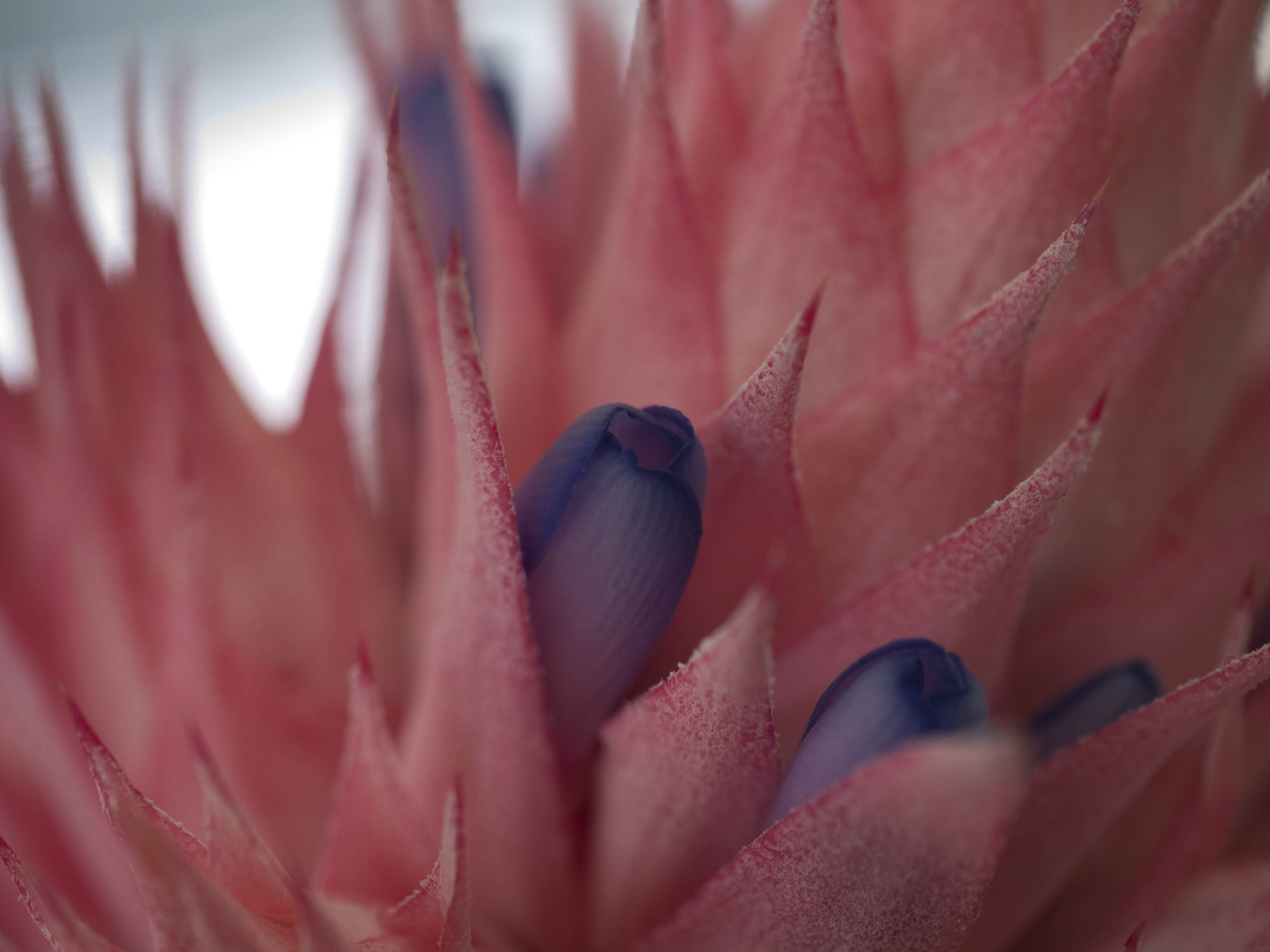 Bromeliad In Flower by Rich M in Regular Member Gallery