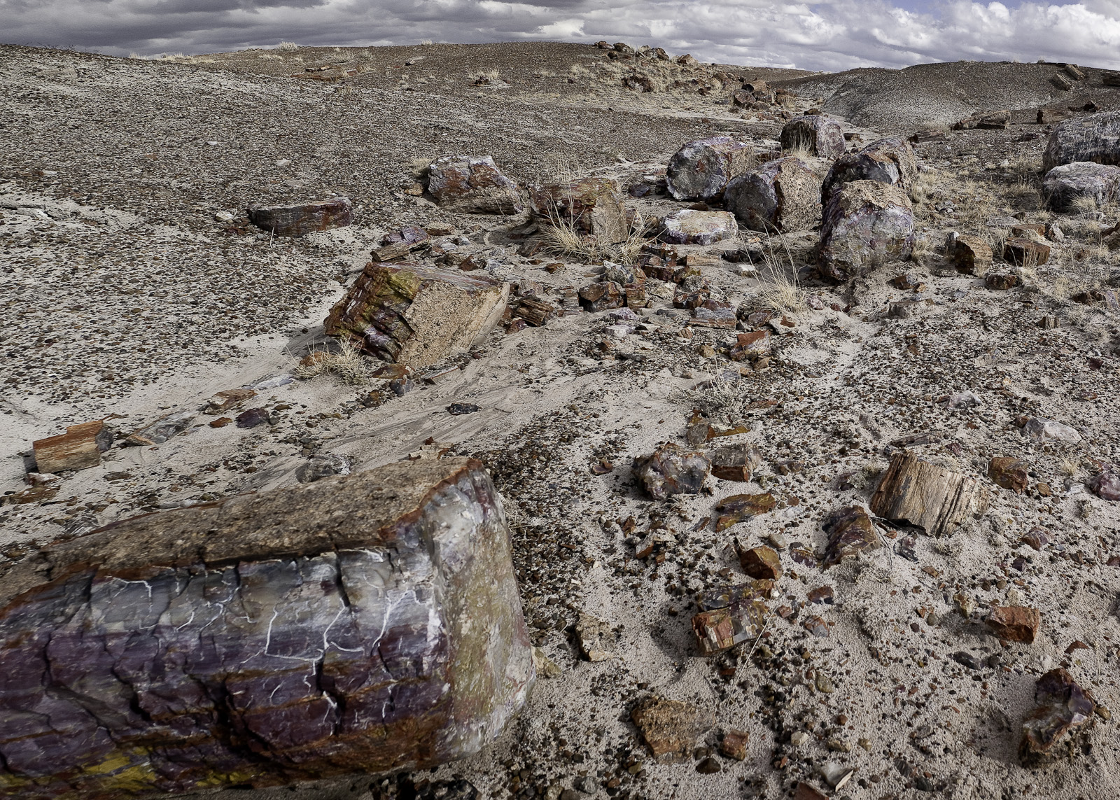 Petrified Forest by Woody Campbell in Woody Campbell