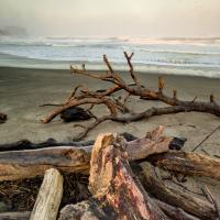 Oregon Coast by Woody Campbell