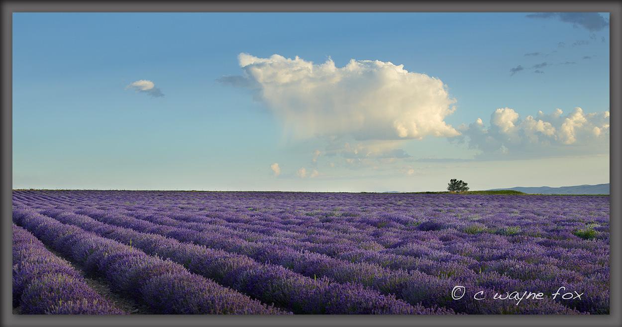 Lavender Fields by Wayne Fox in Regular Member Gallery