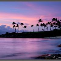 Palm Tree Sunset by Wayne Fox in Regular Member Gallery