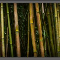 Bamboo Forest by Wayne Fox in Regular Member Gallery