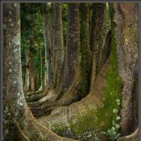 130804 Rainbowsacredforest-004897-edit Getdpi by Wayne Fox in Regular Member Gallery