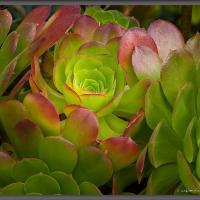 Green by Wayne Fox in Regular Member Gallery