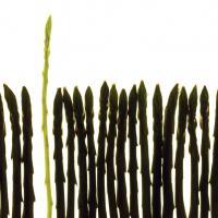 Zen Color by sinwen in Regular Member Gallery