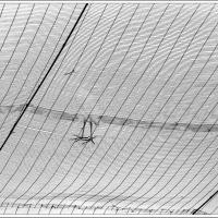 Ibis Sur Filet Metallique by sinwen in Regular Member Gallery