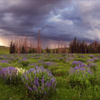 THUNDERSTORM AT CEDAR BREAKS by Charles Wood in Regular Member Gallery