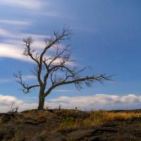 MOONLIT TREE by Charles Wood in Regular Member Gallery