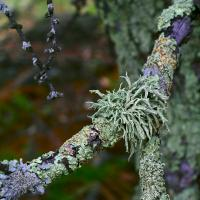 Mosses Lichens 1  by Yuri in Regular Member Gallery