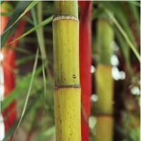 Bamboo by Jorgen Udvang in Jorgen Udvang