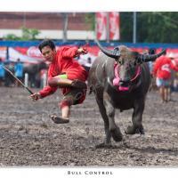 Bull Control by Jorgen Udvang in Jorgen Udvang