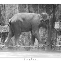 Elephant by Jorgen Udvang in Jorgen Udvang