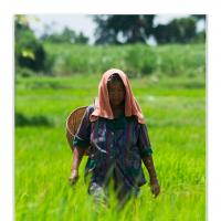 Farmer by Jorgen Udvang in Jorgen Udvang