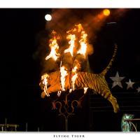 Flying Tiger by Jorgen Udvang in Jorgen Udvang