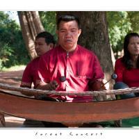Forest Concert by Jorgen Udvang