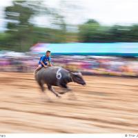 Riding The Buffalo by Jorgen Udvang in Jorgen Udvang
