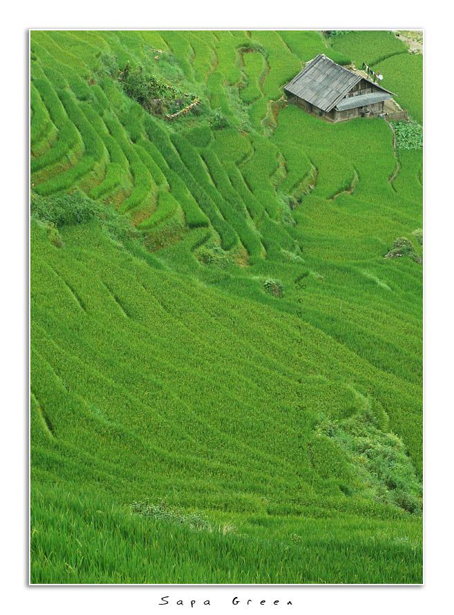 Sapa Green by Jorgen Udvang in Jorgen Udvang