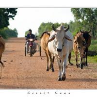 Sunset Cows by Jorgen Udvang