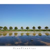 Treeflection by Jorgen Udvang in Jorgen Udvang