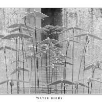 Water Birds by Jorgen Udvang in Jorgen Udvang