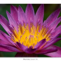 Water Lily Ii by Jorgen Udvang in Jorgen Udvang