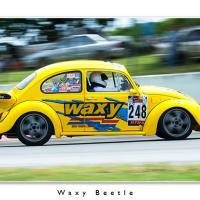 Waxy Beetle by Jorgen Udvang in Jorgen Udvang