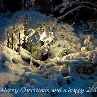 Season's Greetings by jaapv