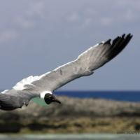 Gull by jaapv in Jaapv