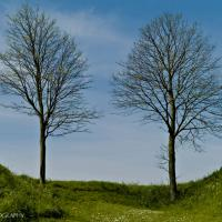 Two Trees by jaapv