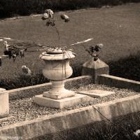 The Last Flowers by jaapv in Jaapv